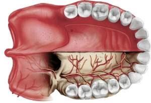 Пародонтит krovosnabjenie zubov